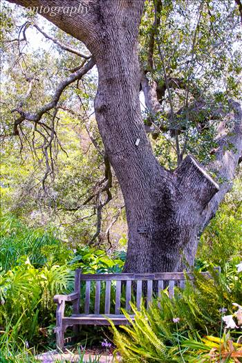 A bench and a Tree.jpg by Aaron