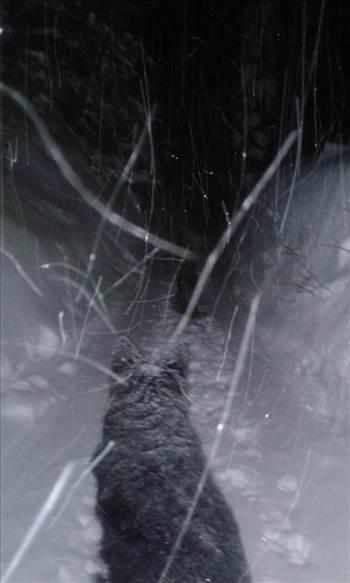 neither rain nor snow nor.jpg by mollyc9