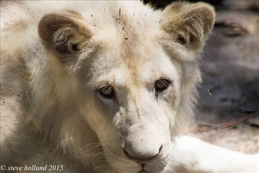 zoo (1 of 1).jpg by Steve Holland