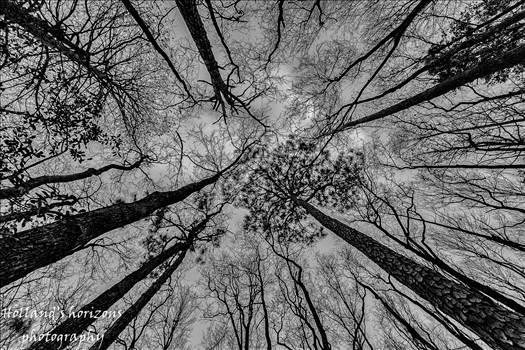 swamp.jpg by Steve Holland