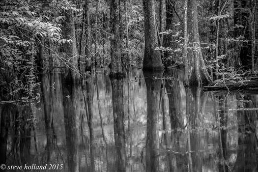 bw  pond (1 of 1).jpg - undefined