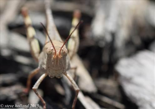 bug2 (1 of 1).jpg by Steve Holland