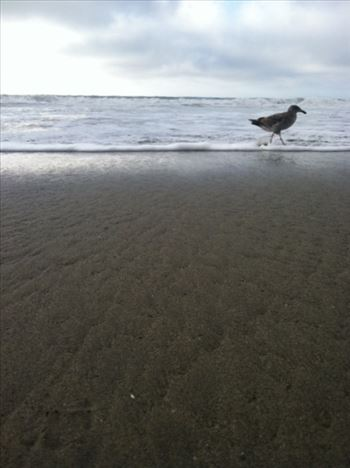 Sea Gull in the Surf by Bridget Oates Photography