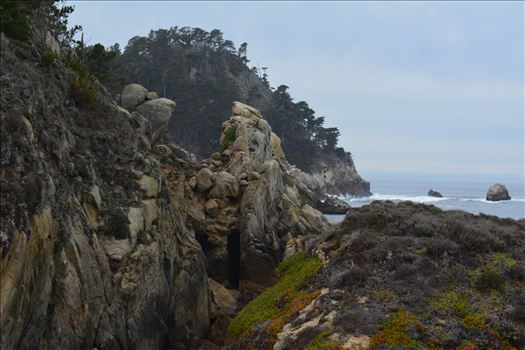 Point Lobos by Bridget Oates Photography