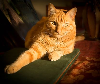 She IS...the most Interesting Cat in the World by Denise Buckley Crawford