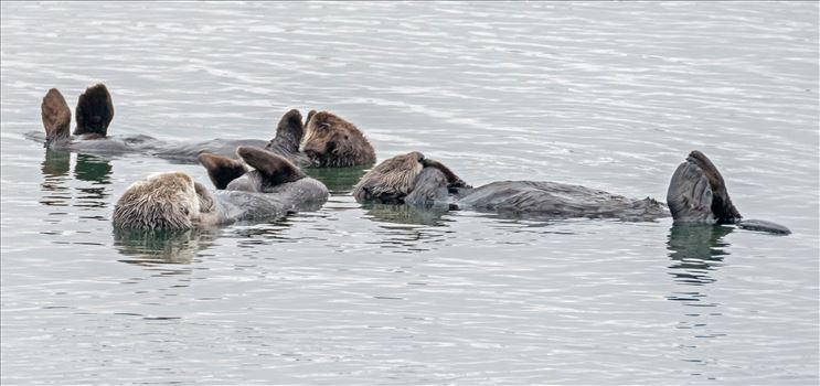 Sea Otter Prayer Group by Denise Buckley Crawford