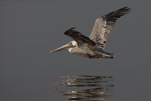 Glide by Denise Buckley Crawford