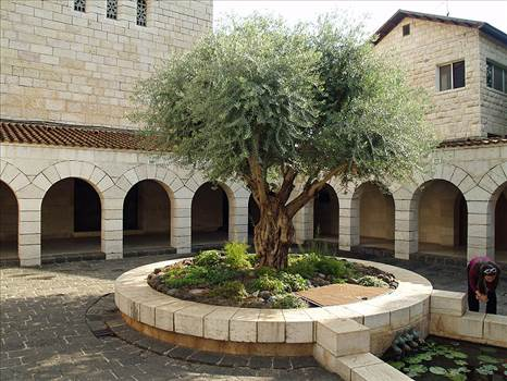 800px-Courtyard_of_the_Church_of_the_Multiplication_in_Tabgha_by_David_Shankbone.jpg by Hp1711