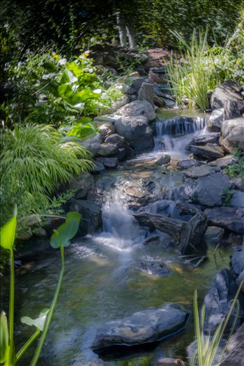 Denver Botanical Garden Falls.jpg by Dennis Rose