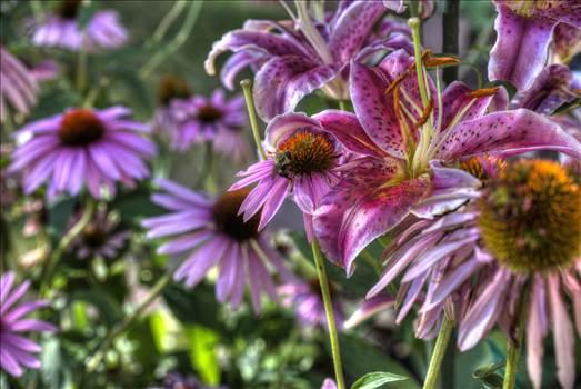 Garden Visitors.jpg by Dennis Rose