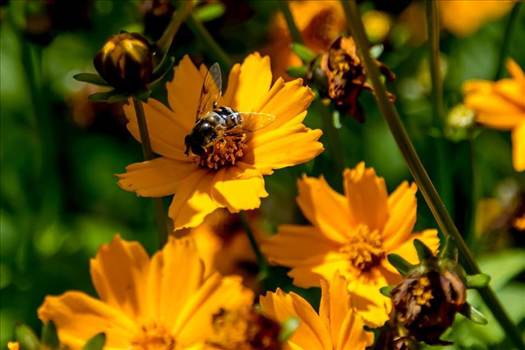Flowers and Bees.jpg by Dennis Rose