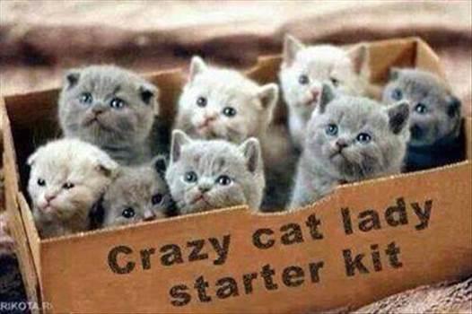 crazycatladystarterkit_zpsc7368920.jpg by Frank Bell