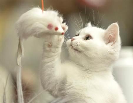 Beauty Cat by gernalreviews