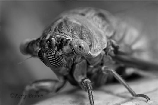 B&W Macro.jpg by Kerry Foster Brown