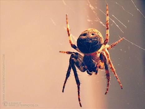 spider-018.jpg - undefined