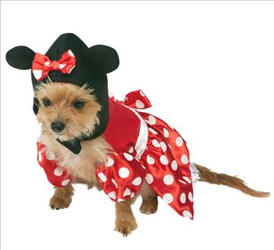 Minnie Mouse Dog Costume 580207.jpg by Thingimijigs