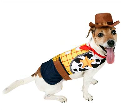 Woody Dog Costume 580210.jpg by Thingimijigs
