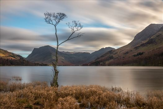 Lone Tree at Buttermere by Tony Keogh Photography