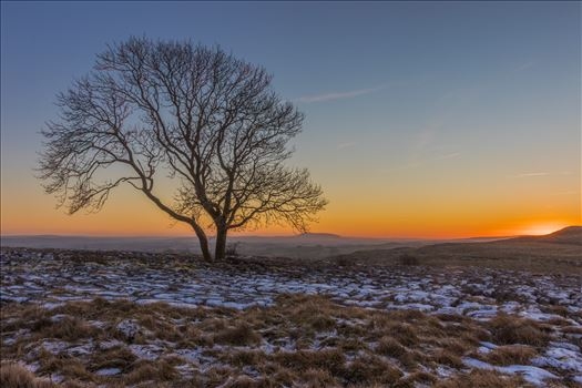 The Lone Tree at Malham by Tony Keogh Photography