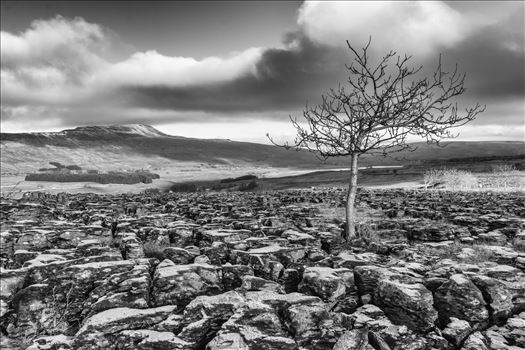 Limestone Pavement at Southerscales in Mono (colour available) by Tony Keogh Photography