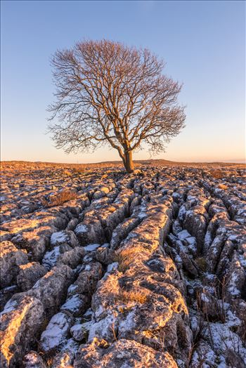 The Lone Tree at Malham in North Yorkshire by Tony Keogh Photography