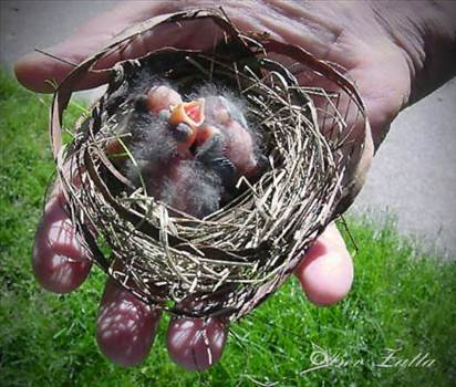 Helping Hand w baby birds ed feb 27 2016.jpg by WPC-156