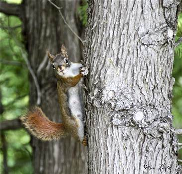 Squirrel_2015.jpg by WPC-156