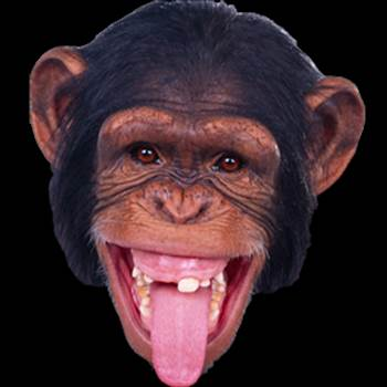 Monkey-PNG-Image-90371.png by marsham1