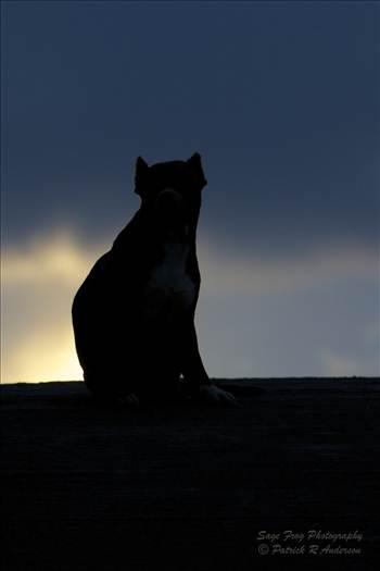 guard-dog-40733050 2048 wm.jpg by Patrick Anderson