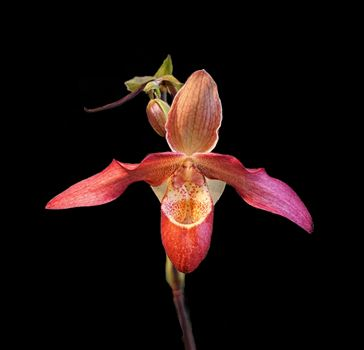 Orchid by CLStauber Photography
