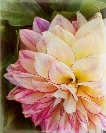 05-pink-dahlia-20170916_153120_A.jpg by CLStauber Photography