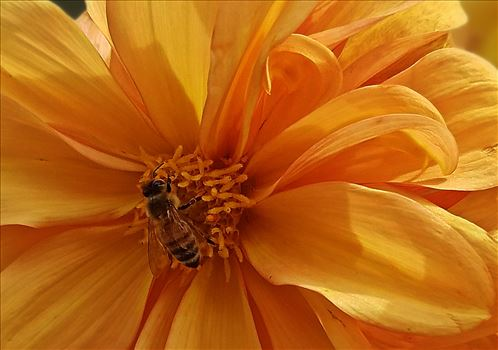 00-yellowflower-bee-20170930_123608C.jpg by CLStauber Photography