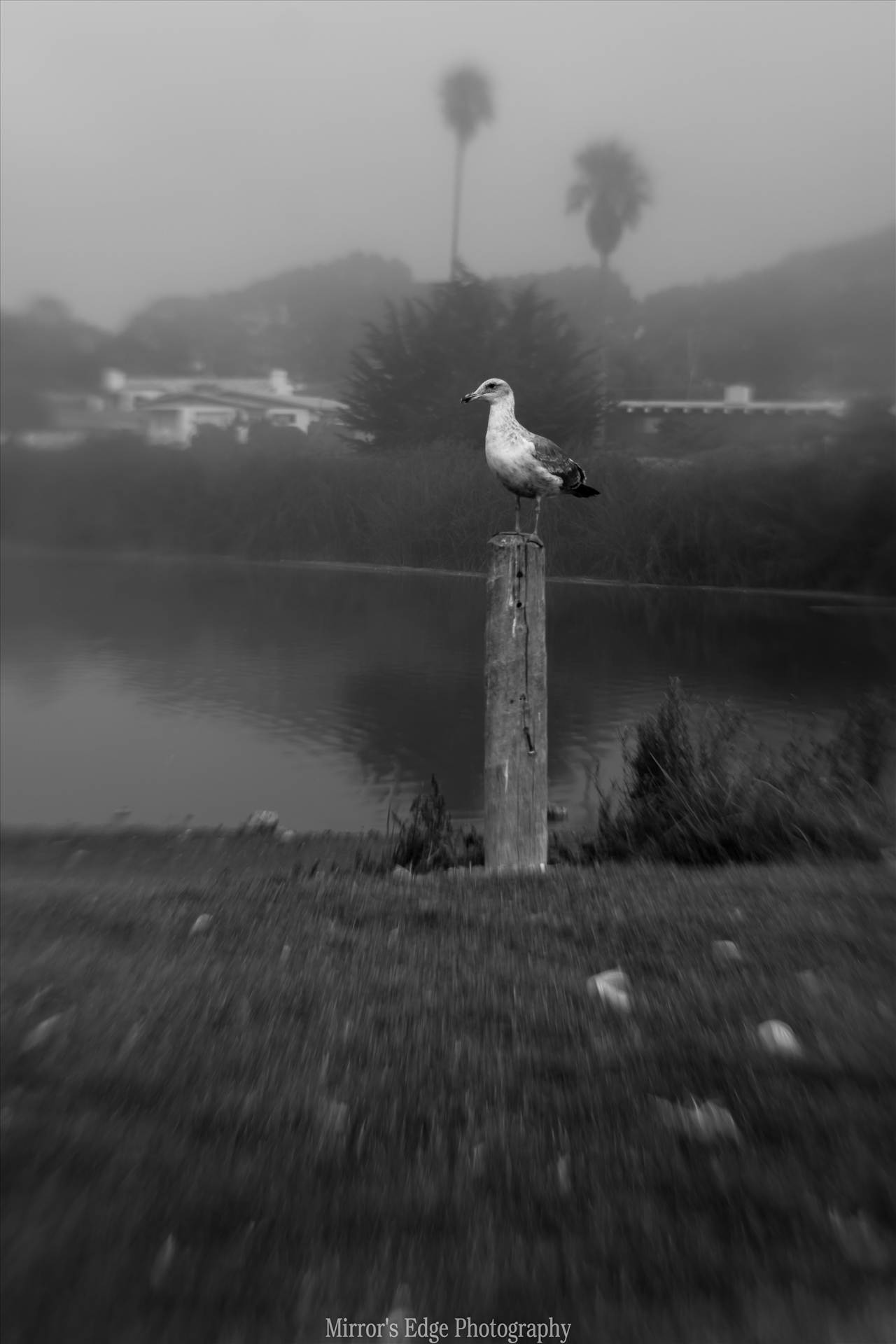 Misty Lagoon and Gull.jpg undefined by Sarah Williams