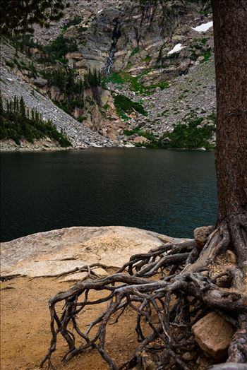 Roots at Emerald Lake by Sarah Williams