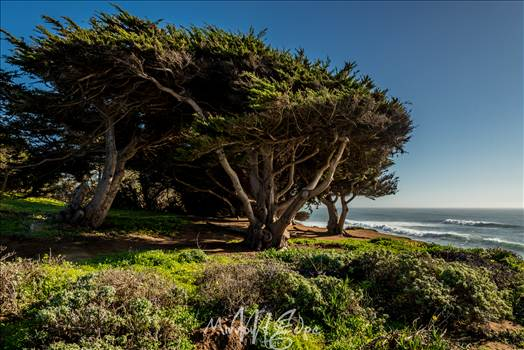 Cambria Pine by the Sea 02132016.jpg - undefined