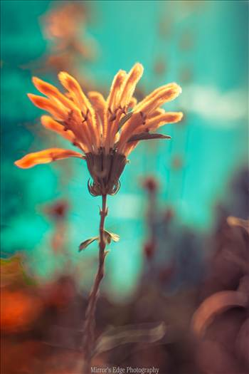 Orange Flower in Wonderland.jpg by Sarah Williams