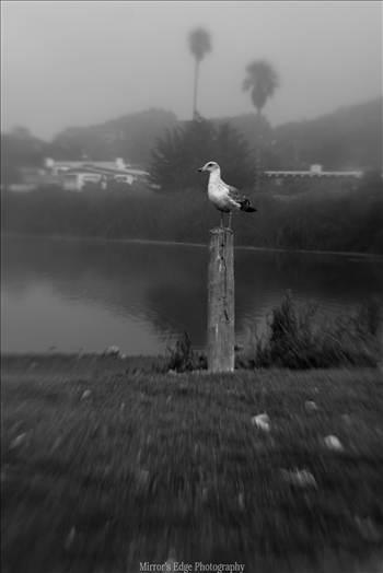 Misty Lagoon and Gull.jpg by Sarah Williams
