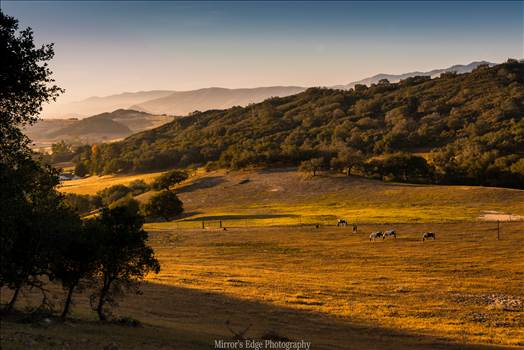 Grazing at Sunset.jpg - undefined