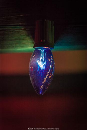 Blue Christmas Light_.jpg by Sarah Williams
