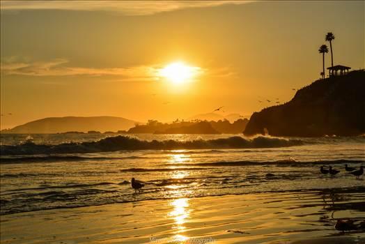 Pismo Beach Golden Sunset.jpg by Sarah Williams