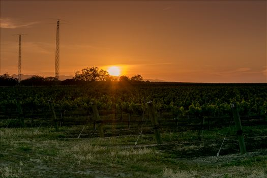 Vineyard Orange Glow Sunset.jpg by Sarah Williams