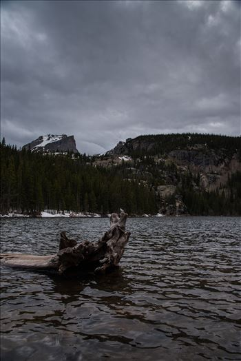 Bear Lake Driftwood FP (1 of 1).JPG by Sarah Williams