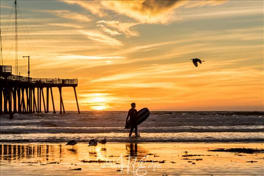 Sunset Surfing and a Flying Bird.jpg by Sarah Williams