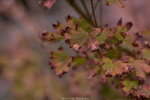 Curled Leaves by Sarah Williams