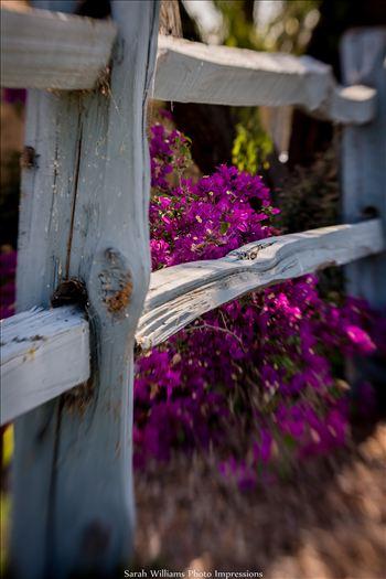 Country Days.jpg -