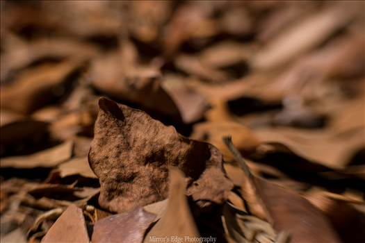 Chocolate Leaves Fallen.jpg by Sarah Williams