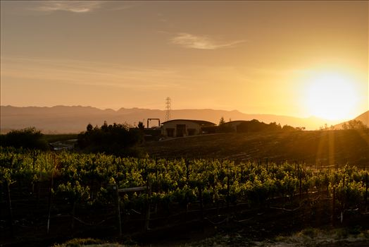 Vineyard Sunset.jpg by Sarah Williams