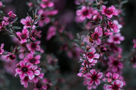 Pollination 10252015.jpg by Sarah Williams