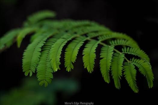 Green Fern 10252015.jpg - undefined