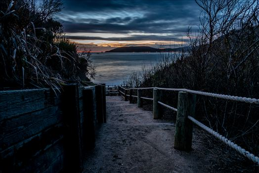 The Cove Path at Night.jpg by Sarah Williams